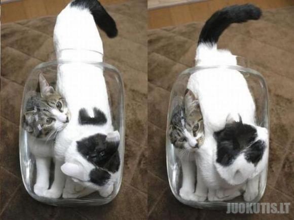 Amžinai tos katės kur nors įlenda