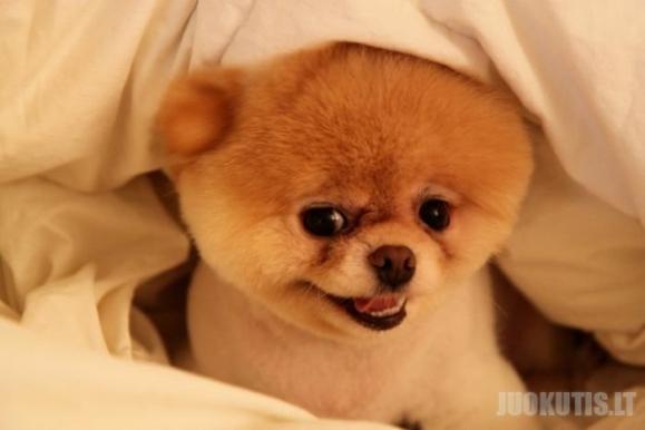 Šunelis Bū