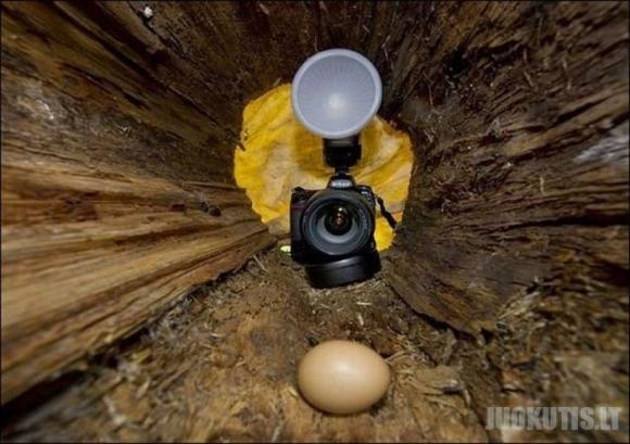 Kas kiaušinius vagia