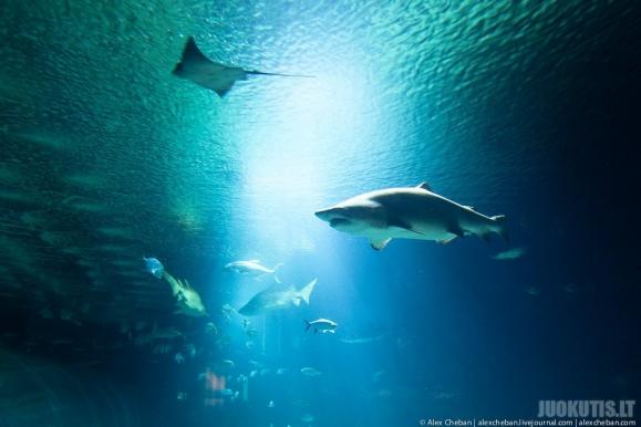 Didžiausias akvariumas Europoje
