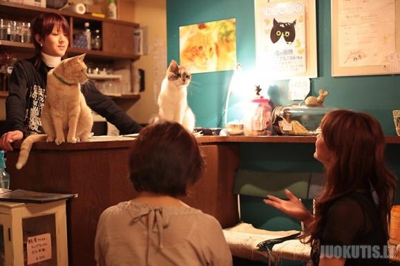 Kačių kavinė