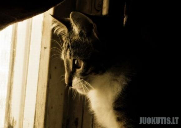 Katinynas