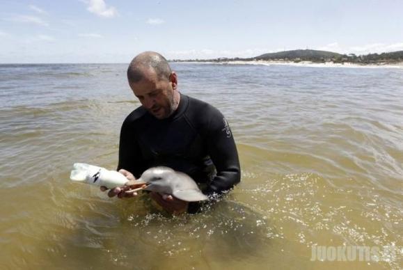 Išgelbėtas delfiniukas