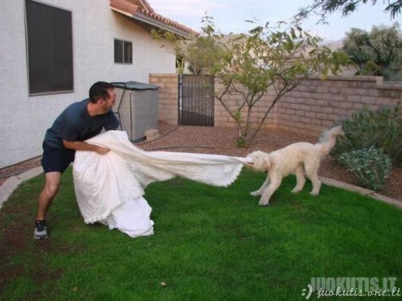 Ką galima nuveikti su neištikimos žmonos vestuvine suknele