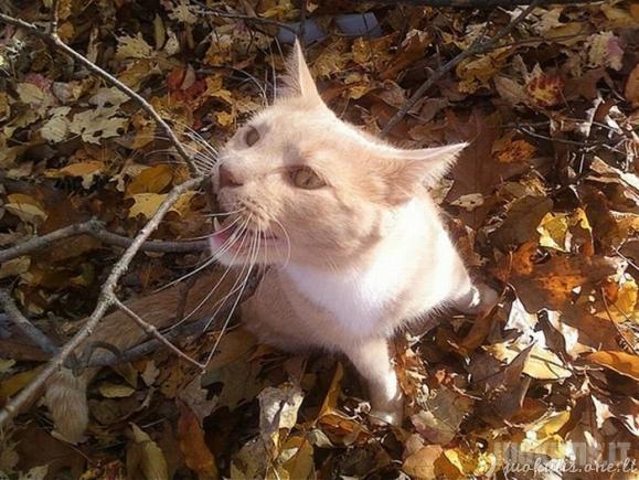 Katės ir ruduo