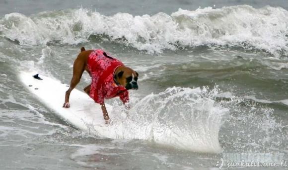 Šunys-banglentininkai