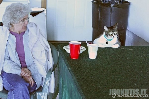 Super stori katinai