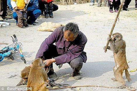 Žiaurūs gyvūnai