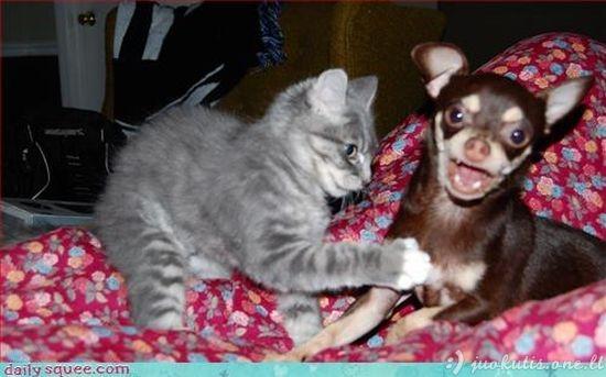 Juokingų gyvūnų nuotraukų rinkinys