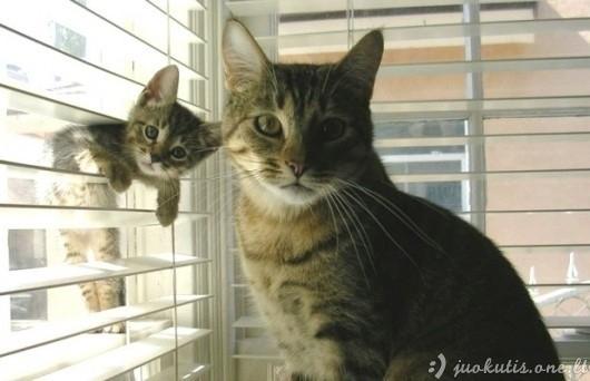 Gražiausi katinėliai