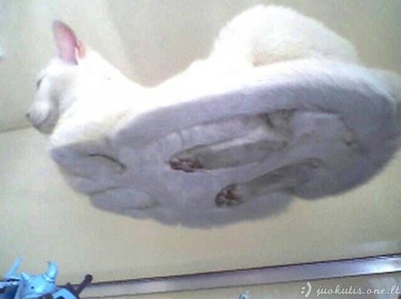 Debesiškos katės ant stiklo