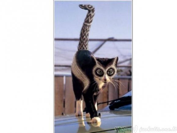 Nudažytos katės