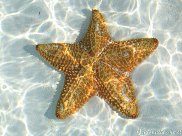 Jūrų žvaigždės