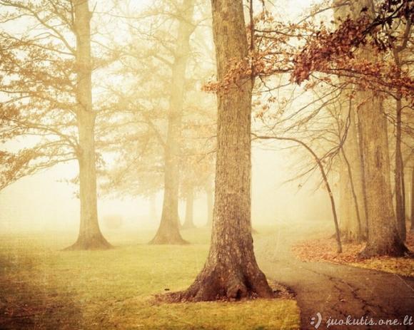 Miškai iš pasakų