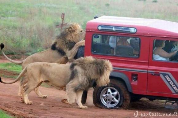 Tik Afrikoje...