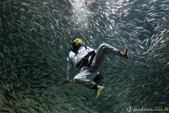 Geriausios 2011 metų Reuters nuotraukos