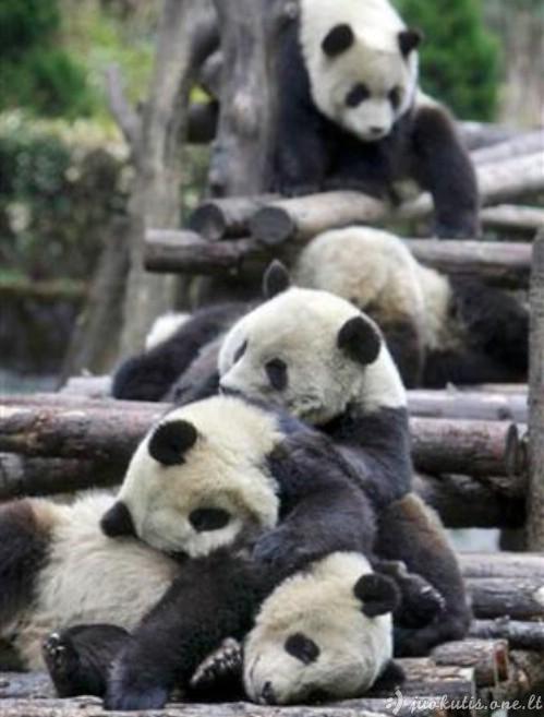 Pavargę gyvūnai