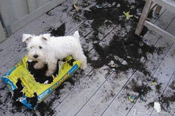 Šunų išdaigos