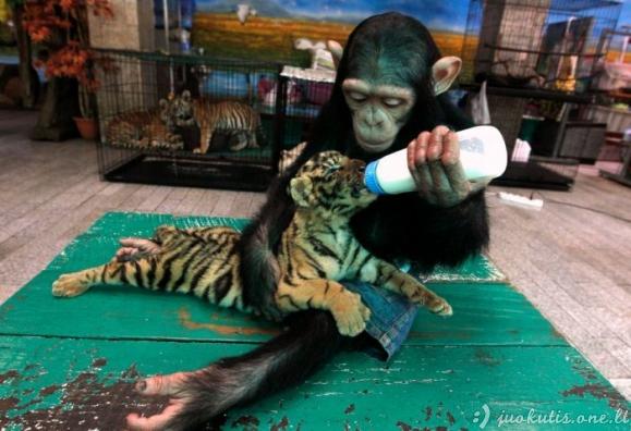 Geriausios gyvūnų nuotraukos per 2011 metus