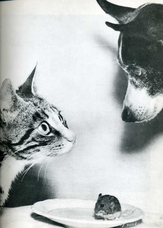 Keistos ir neįprastos nuotraukos iš žurnalo Life