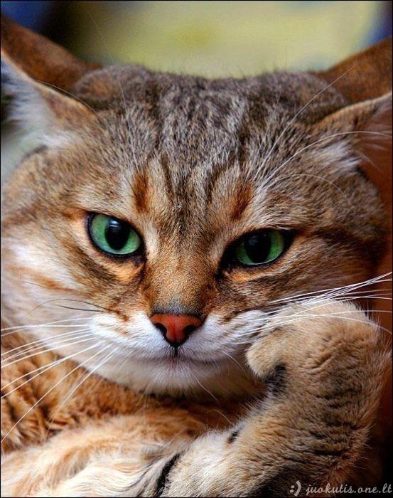 Savaitės katinynas