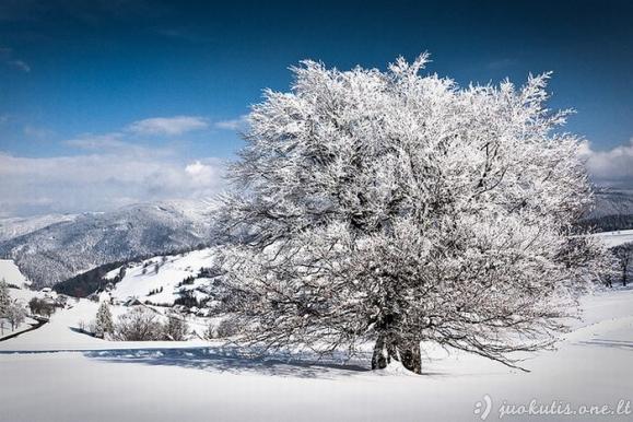Gražios žiemos nuotraukos