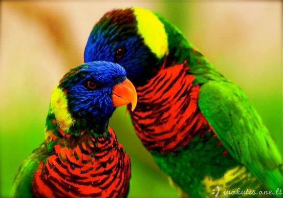 Paukščiai - nuostabios spalvotos būtybės