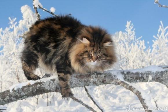 Nuostabus katinas