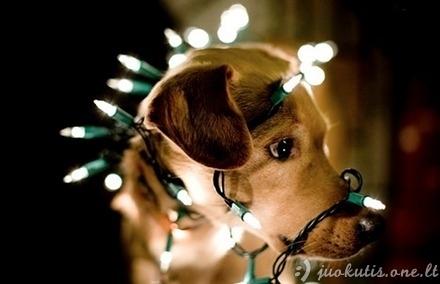 Kodėl šunys nemėgsta švenčių