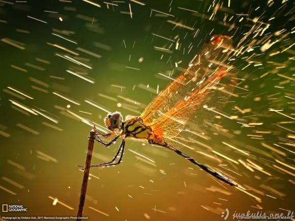Geriausios gruodžio National Geographic nuotraukos