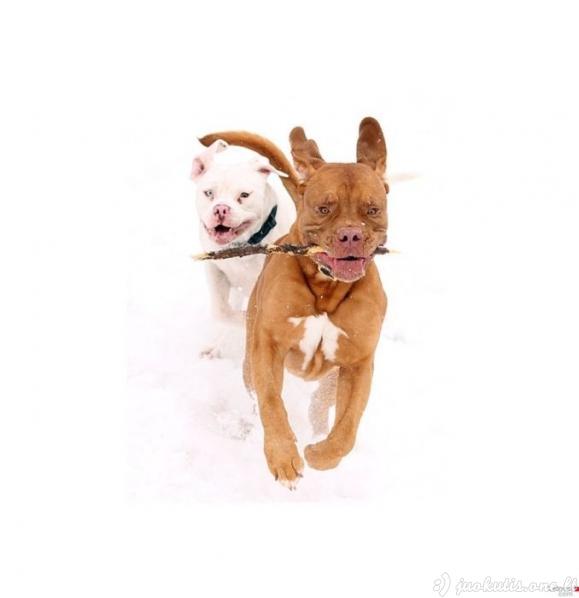 Linksmos šunų nuotraukos
