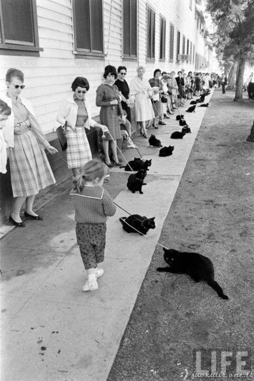 Juodų kačių kastingas Holivude