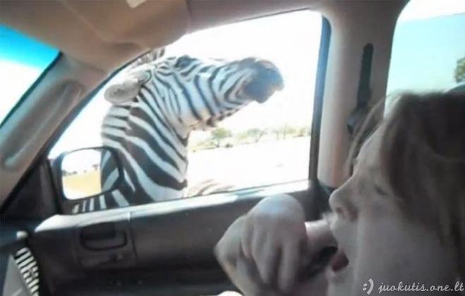 Piktas zebras