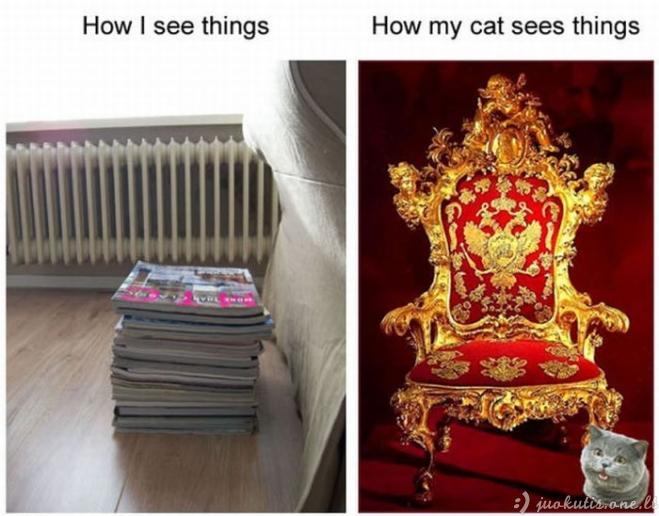 Kodėl katės keistai elgiasi
