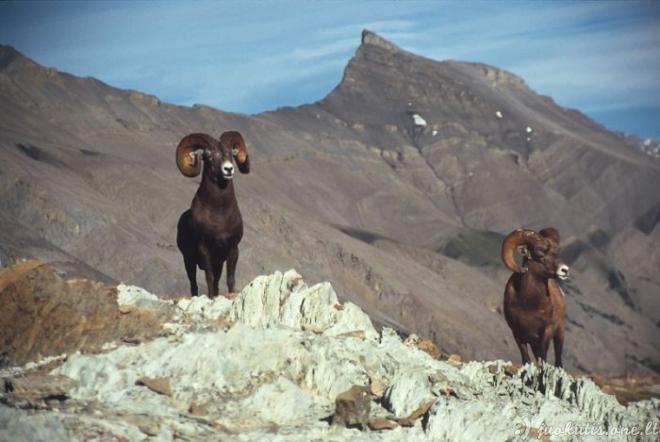 Graži Aliaskos gamta