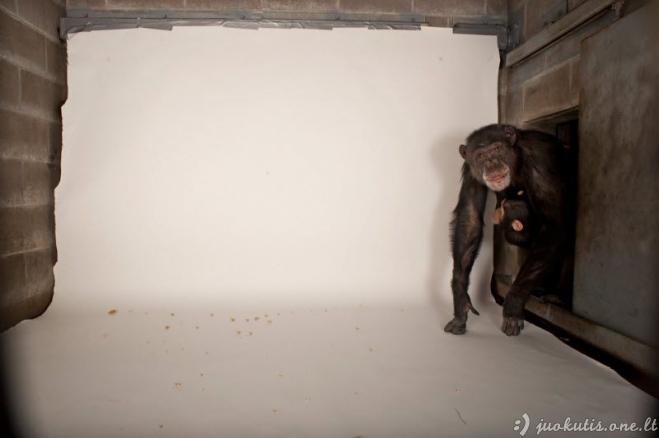 Kaip daromos National Geographic nuotraukos