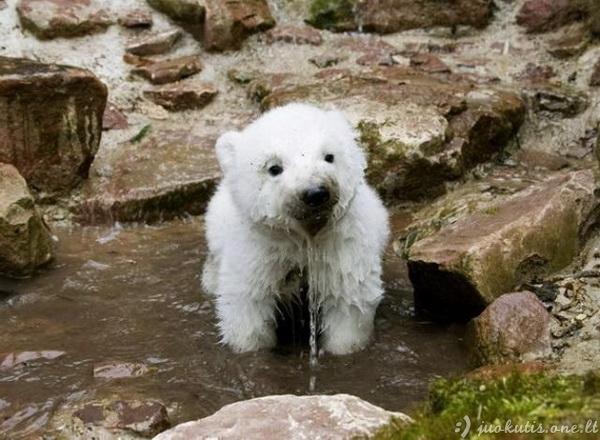 Linksmos gyvūnų nuotraukos