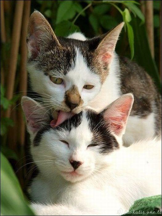 Kačių mylėtojams skiriama