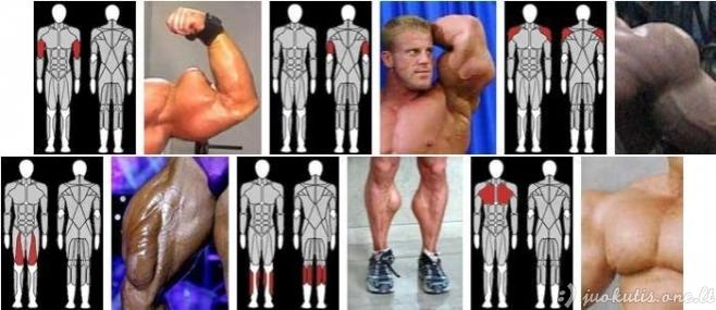 Sintolo raumenys