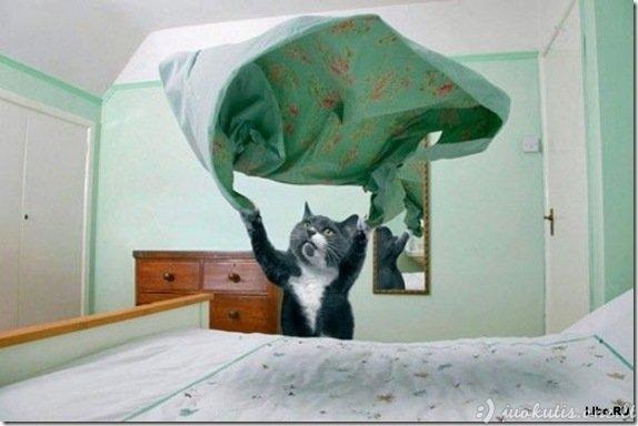 Tobulas katinas