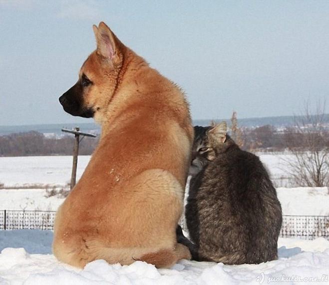 Drauge amžinai