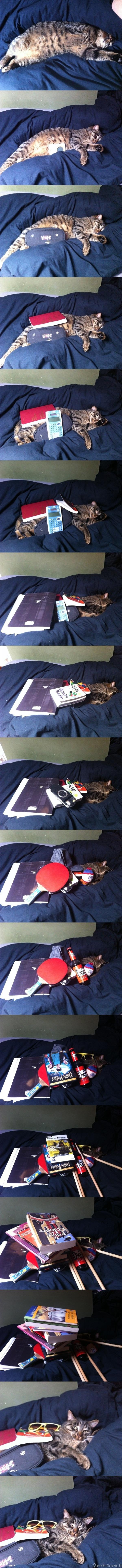 Ką galima padaryti katinui, kol jis kietai miega