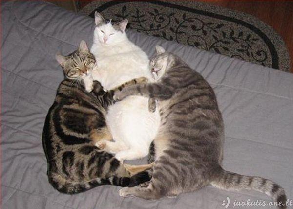Gyvūnai, užklupti intymioje situacijoje