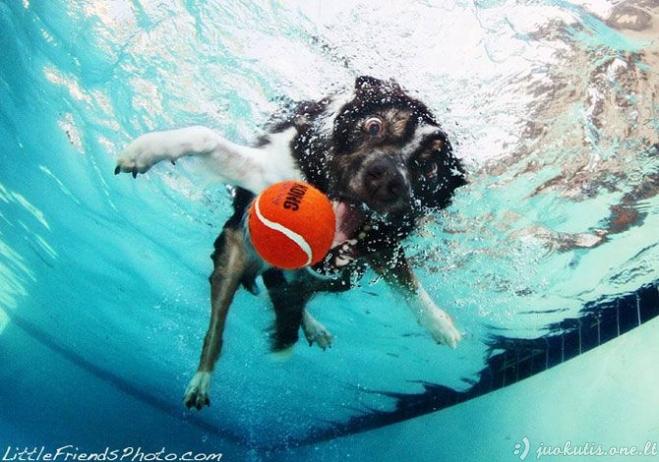 Šunys po vandeniu