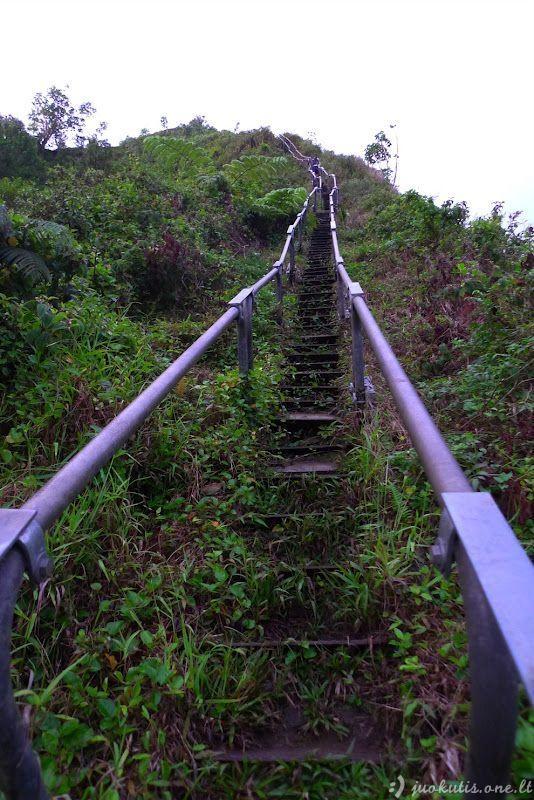 Laiptai į dangų Havajuose