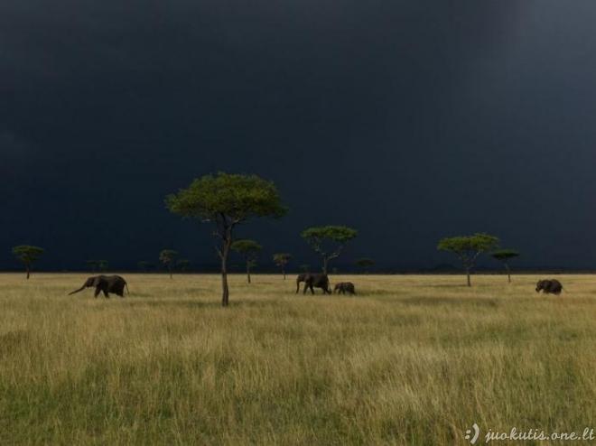 Geriausios National Geographic nuotraukos. Vasaris.