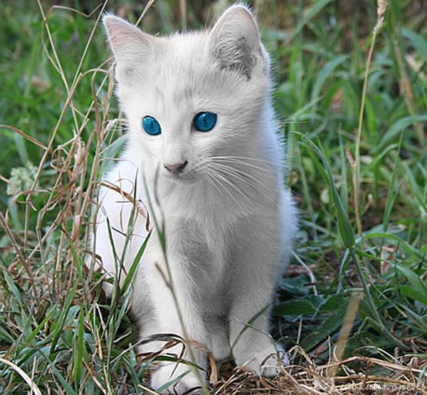 Gyvūnai albinosai