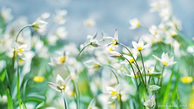 Pavasaris atžygiuoja