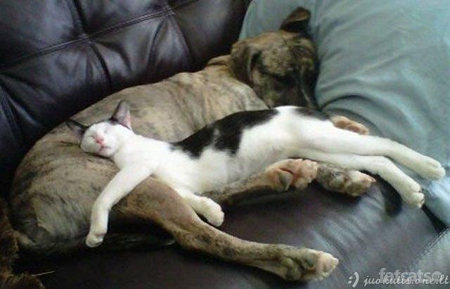 Katės miega