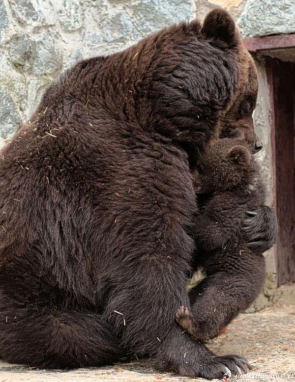 Kaip meška auklėja savo vaiką